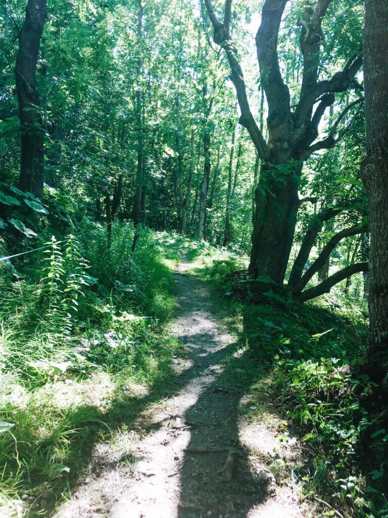 Elva, sentiero nel bosco